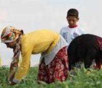 DOĞAN KESKİN YAZDI:  Mevsimlik Göç Eden Tarım İşçileri ve Virüs Salgını