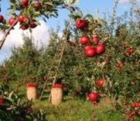 Mevsimlik İşçiler En Zor Yolculuğa Çıkacak